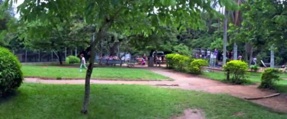 Imagem de grama do parque com algumas árvores
