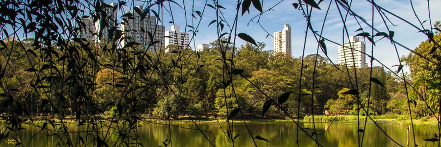 foto do Parque da Aclimação mostrando uma parte do lago, da vegetação e prédios atrás desta.