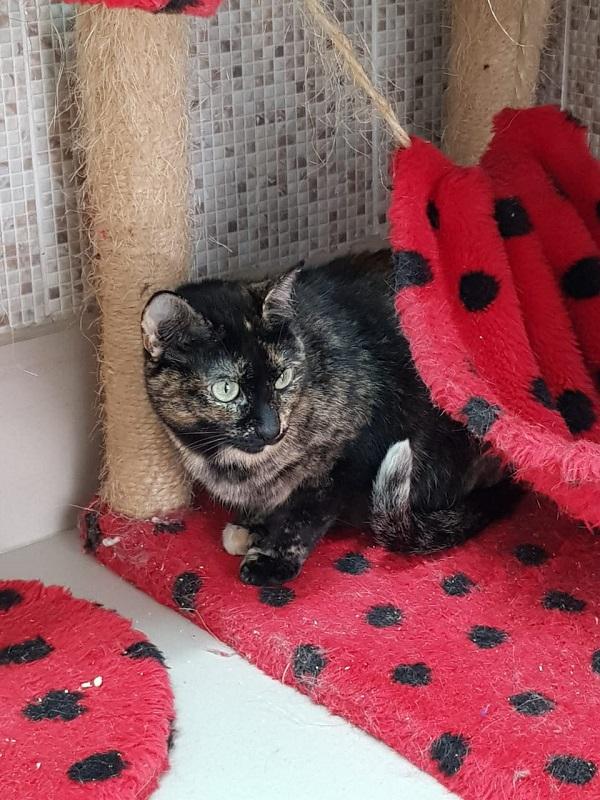 #PraCegoVer: Fotografia da gata Zinha, seus olhos são verdes e suas cores são preto e cinza. Está sentada, encolhida enquanto é fotografada.